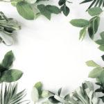 shutterstock_471981607 Blätter Eykalyptus Rahmen